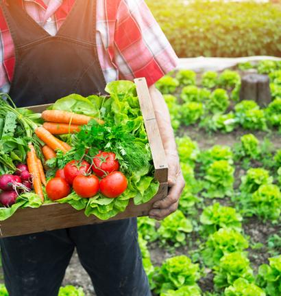 alimentation-environnement-green-food
